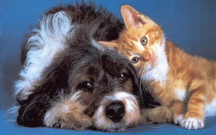¿Es más feliz la gente con perros que con gatos?